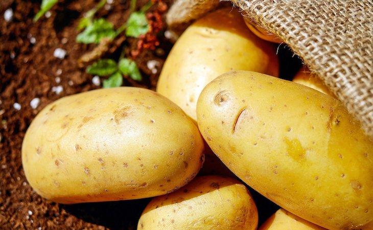 Levadura de patatas